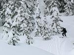 Phillip enjoying some glade skiing
