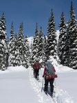 Skinning up the logging road