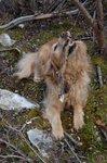 Oliver rampant on a stick.