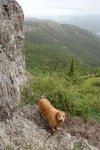 My wet hiking buddy. Grey Mountain, Whitehorse, Yukon