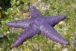 We saw many star fish