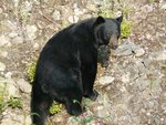 This bear wasn't too happy about us, he was breathing hard