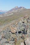 A marmot, back at Jonas shoulder (day 5)