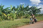 Banana trees on the way to Palma Rubia, where we stayed on a farm in this tiny village (7 families)