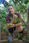 "Gregorio named him ""mono blanco"" (white monkey): picking guayabas"
