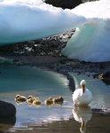 Hiding Among Icebergs