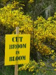 Yep, the Brooms were in blossom