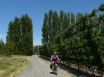 Apple orchards, guarded from the wind by tall trees