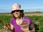 Strawberry Picking at Westham Island Herb Farm