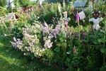 A nice garden along the way