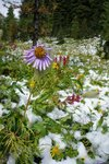 Flowers in the snow, fall and spring combined?