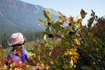 Incredibly large and abundant Huckleberries, near the trailhead