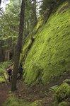 Walls of moss