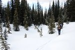 Skiing through nice open forest, creeks, and meadows