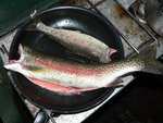 Rainbow Trout for dinner, yum!