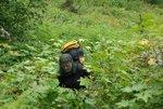 Deep bush