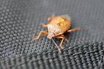 Bug on my bag!