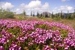Illal Meadows