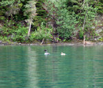 Bowron Lake canoe Aug 19-24 028.jpg