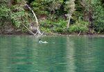 Bowron Lake canoe Aug 19-24 029.jpg