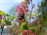 Bumble Bee?