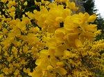 Yellow flowers everywhere