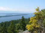Views from Bodega Ridge