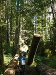 Starting an 8 day traverse of Strathcona Prov. Park. In the old growth forest