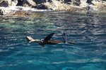 We swam with many baby sea lions, they are very playful