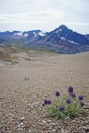 Purple flowers with Jonas Creek and Pass beyond