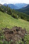 Grizzly diggings