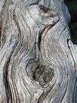Waves in wood