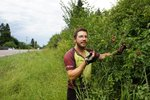 """Picking cherries along Hwy #35, which we christened """"The Cherry Road"""""""