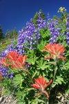 More flowers on the Windy Joe Trail