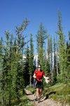Maya hiking amongst the larches