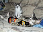 party kittens