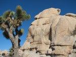 Chimney rock, Joshua tree