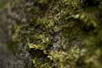 Moss 1.jpg