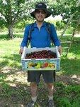 10 Kilograms of Cherries