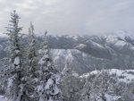 Something to remember: lots of trees in Manning Park