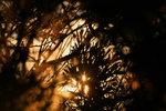 Sunset, Vantage WA. Photo: Jannu Casanova