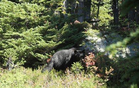 2014-09-14 Garibaldi & Panorama Ridge 2014 8580