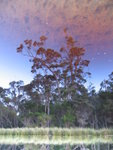 Eucalyptus reflection on Tannin Water, South Coast Track, Tasmania.JPG