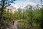 Wandering through the Larches