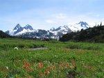 Even more lovely alpine