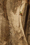Mike Blicker climbing Crescent Crack