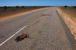 Roo Roadkill