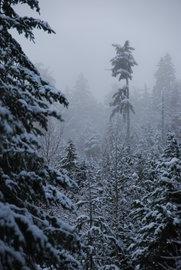 Mt. Sproatt mist