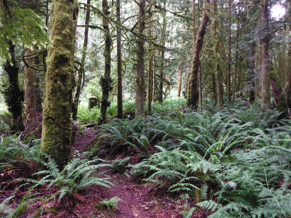 Beautiful trail.