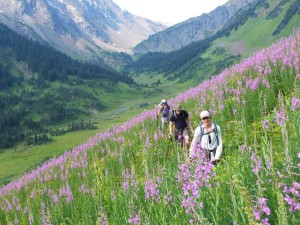 There was lots of this going on: Blissful tramping through the lush flowery alpine